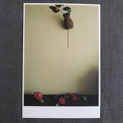 季節の葉書 藪椿