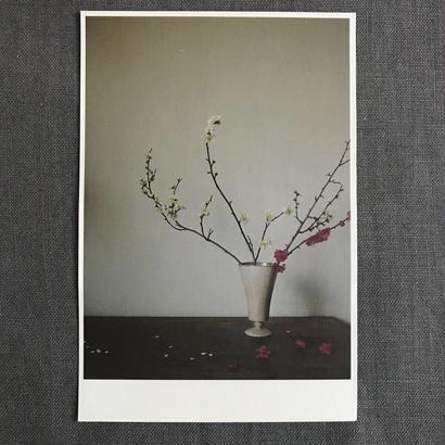 季節の葉書 紅白梅