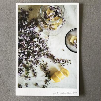 季節の葉書 藤と檸檬