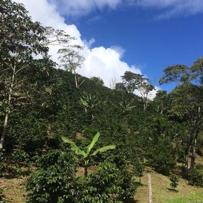 Honduras - La Leona