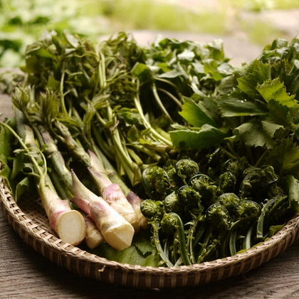 日知舎の山菜 Edible Wild Plants