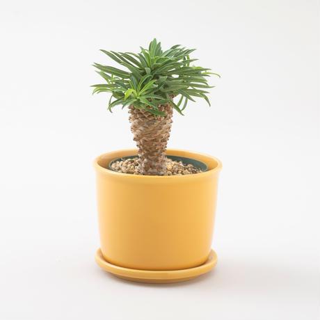 Mug Pot【マグポット】