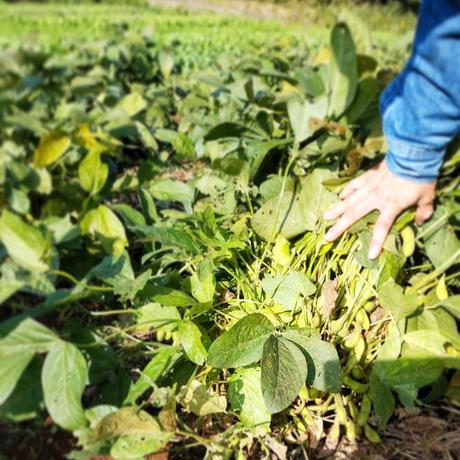 たのくろ豆の枝豆とルッコラのグリーンソース*次回発送 12月10日(木)11日(金)*ラストオーダー7日(月)