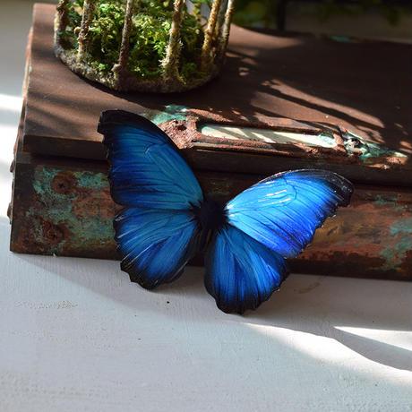 蝶のマグネット メネラウスモルフォ new blue plus.col Ssize 翅薄型