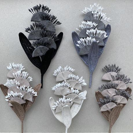 century plant / 竜舌蘭