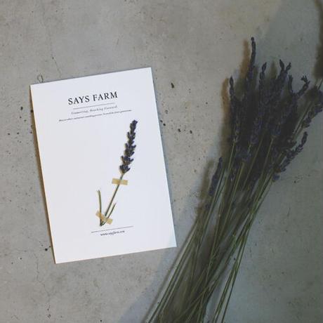 herbarium (SAYSFARMで採れたハーブ)