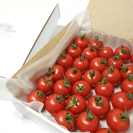 濃甘フルーツトマト「太陽のたまもの」コンパクトBOX