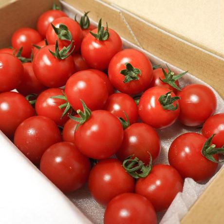 濃甘フルーツトマト「太陽のたまもの」「太陽のたまもの MINI」コンパクトBOX セット