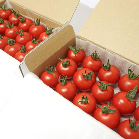 濃甘フルーツトマト「太陽のたまもの」コンパクトBOX SMALL 2箱