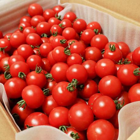 濃甘フルーツトマト「太陽のたまもの」3kg