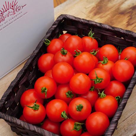 濃甘フルーツトマト「太陽のたまもの」4.5kg