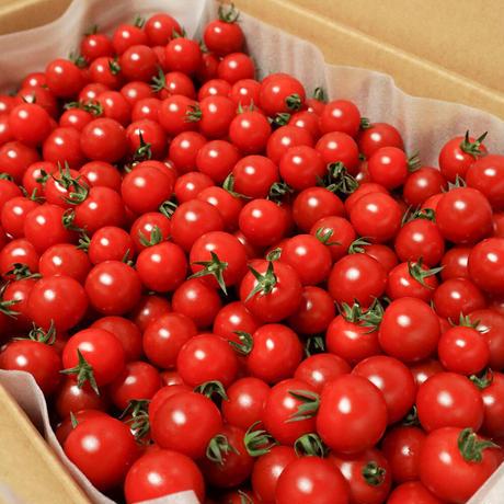 濃甘フルーツトマト「太陽のたまもの MINI」3kg
