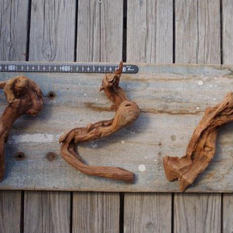インドネシア産マングローブ流木 Driftwoods
