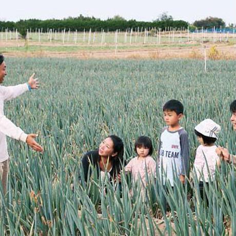 10月13日開催!長ネギの収穫体験