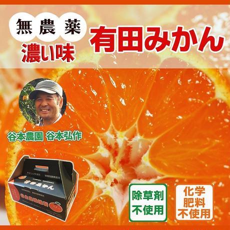 【高糖度濃い味】無農薬有田みかん  5Kg