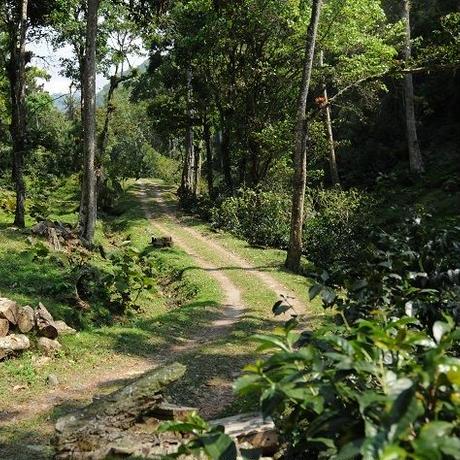 パナマ カジェホン農園                   ゲイシャ ナチュラル 100g