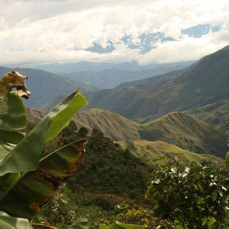 コロンビア サマニエゴ 200g