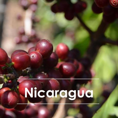 ニカラグア ファティマ 200g