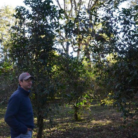 グァテマラ エル・レティロ・デ・キサヤ農園 200g