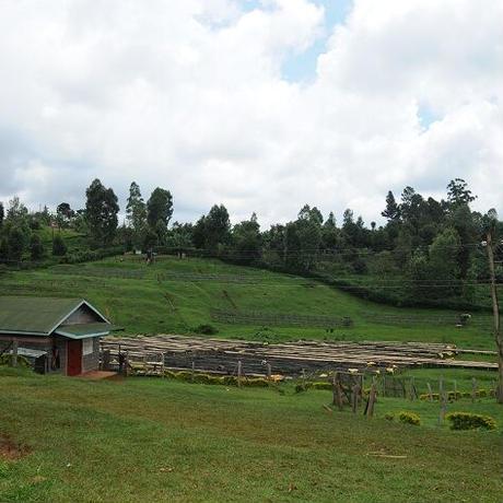 ケニア キウニュファクトリー 100g