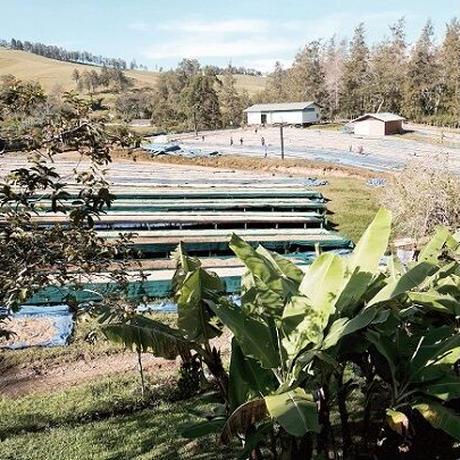 パプアニューギニア バロイダ農園