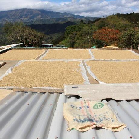 コロンビア  エル・セドラール農園 200g