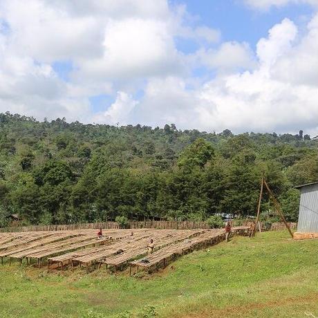 エチオピア  ゴティティステーションN 200g