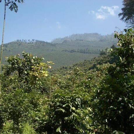 グァテマラ エル・ディアマンテ農園 200g