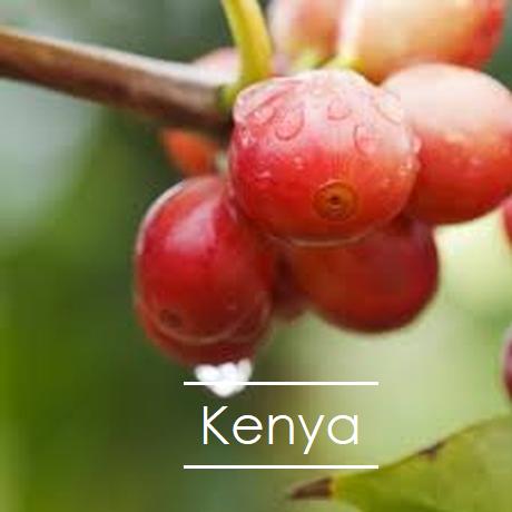ケニア カラツ  200g