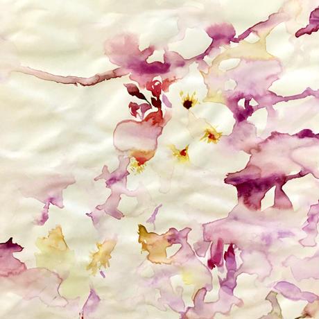 桜のドローイング