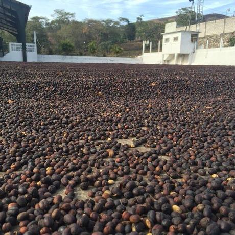 グアテマラナチュラルカップオンコーヒー12個セット