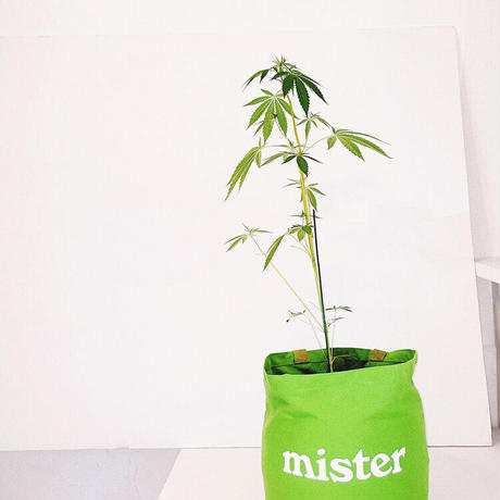 Mister Green / Grow Bag / Tote - Small