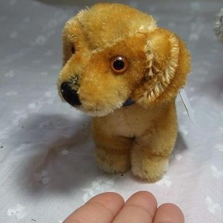シュタイフダックス子犬 o-329