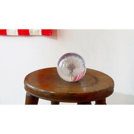 Paperweight Hafod Grange / ハフォド・グレンジ ペーパーウエイト Dandelion 綿毛 Lサイズ