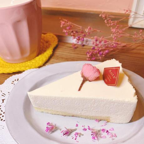 母の日ギフト熟成チーズケーキ  6個入り(カット済)