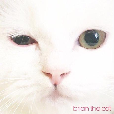 White Kitty Wink face PVC mini sticker(album jacket like)