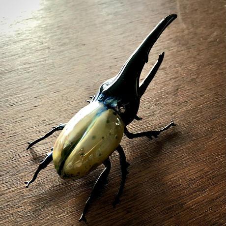 Hercules beetle/ヘラクレスオオカブト