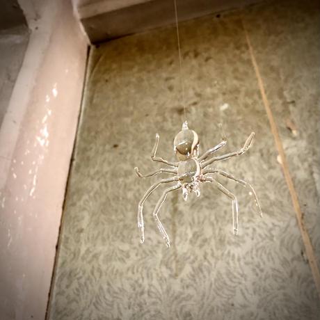 spider/蜘蛛