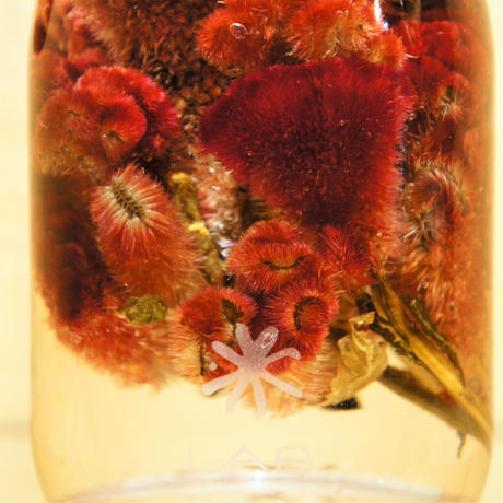"Lab bottle plants""celosia argentea"" 1,000ml"