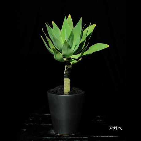 Green Plants ー観葉植物ー