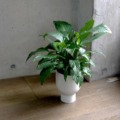 kutani planter