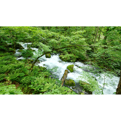 4Kカメラ映像【HealingBlueヒーリングブルー】奥入瀬渓流 新緑  OIRASE GORGE OF FRESH GREEN〈60fps 動画約52分, approx52min.〉