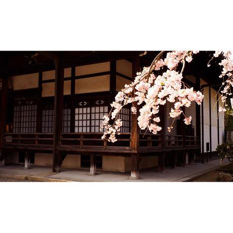4Kカメラ映像【Healing Blueヒーリングブルー】京都・桜 SAKURA in Kyoto〈動画約45分, approx45min.〉感動の4Kカメラ映像100種収録
