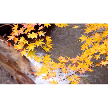 4Kカメラ映像【HealingBlueヒーリングブルー】奥入瀬渓流 紅葉  OIRASE GORGE OF AUTUMNAL LEAVES〈60fsp 動画約45分, approx45min.〉