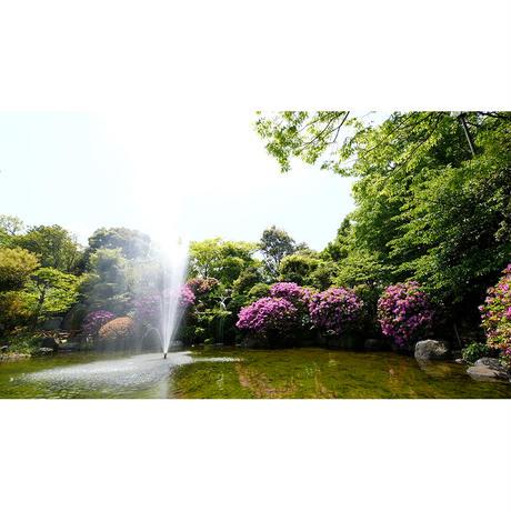 4Kカメラ映像【HealingBlueヒーリングブルー】清涼 - 水・風・緑  COOL SCENERY, Kakitagawa River Park〈動画約54分, approx54min.〉