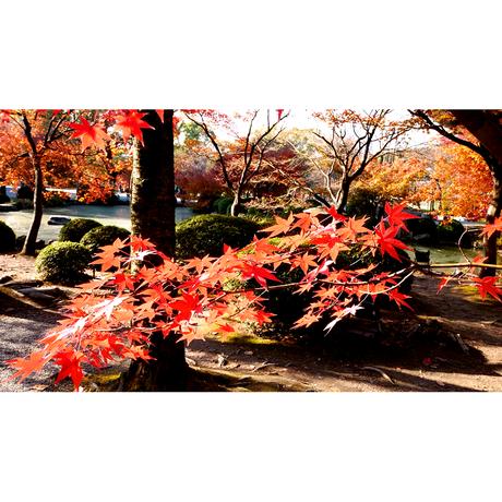 4Kカメラ映像【Healing Blueヒーリングブルー】京都・紅葉 RED LEAVES in Kyoto〈動画約40分, approx40min.〉60fps感動の4Kカメラ映像80種収録