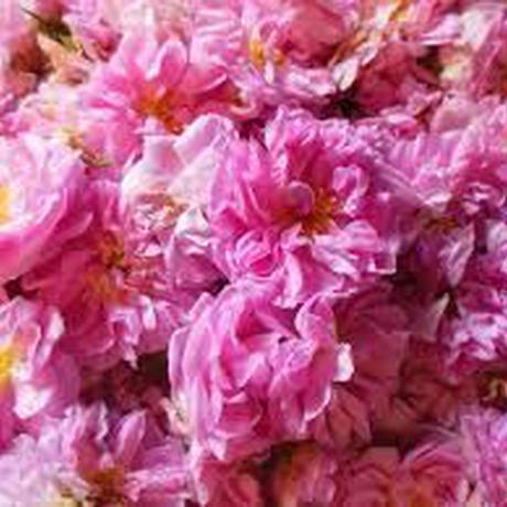 ダマスクローズ(Damask Rose)エッセンシャルオイル3mL