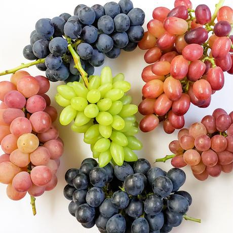 朝採れ完熟ブドウ 季節の詰め合わせ約2.5kg(4~6房)