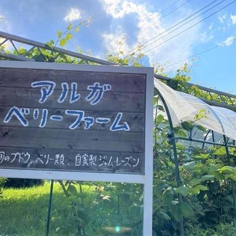 朝採れ完熟サニールージュ(種なし) 2kg(3~4房)