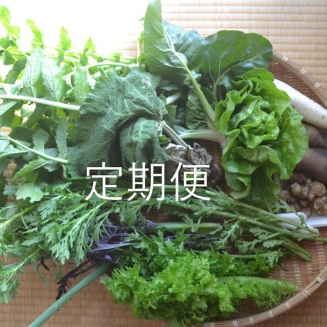 【定期便】クールで対応 おまかせ野菜セット(小)送料無料
